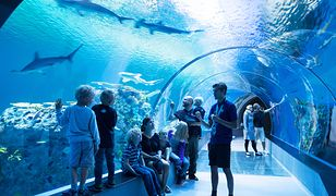 Podziwianie rekinów w oceanarium jest nie lada atrakcją w każdym wieku