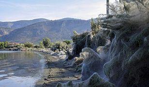 Jezioro leży nieopodal Aten, stolicy Grecji. Gigantyczna zaś pajęczyna to dzieło pająków z rodzaju Tetragnatha