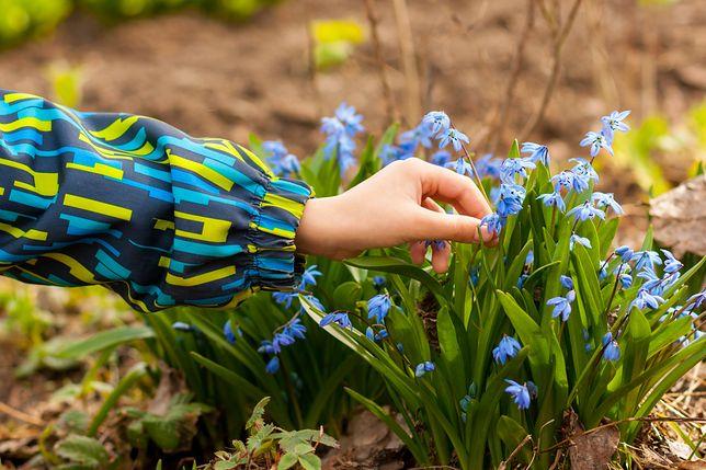 Kwiecień w wiosennym ogrodzie. Które prace warto wykonać?