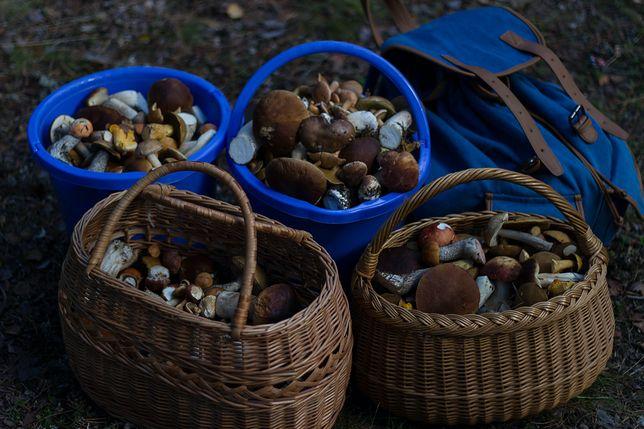 Robaczywe grzyby