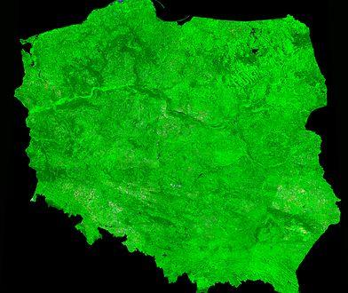 Polska urosła w minionym roku o ponad półtora tysiąca hektarów