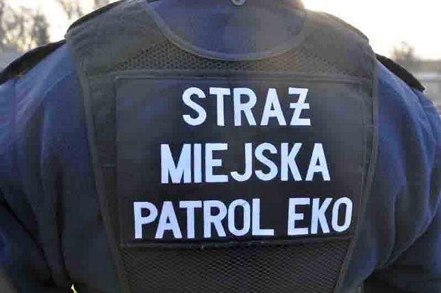 Warszawa. Strażnicy miejscy uratowali rannego ptaka