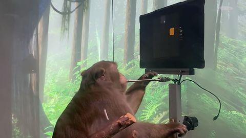 Neuralink Elona Muska pozwolił małpie grać umysłem w Ponga