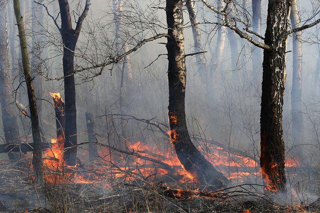 Dramatyczna sytuacja w lasach. Liczba pożarów może być rekordowa.