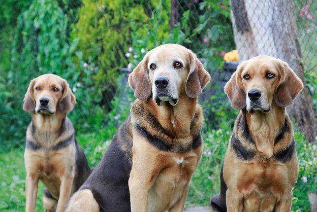 Aż 20 tysięcy psów na warszawskim Euro Dog Show