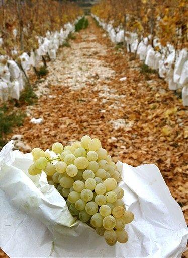 Nagie winogrona wystarczą by przekupić szczęście?