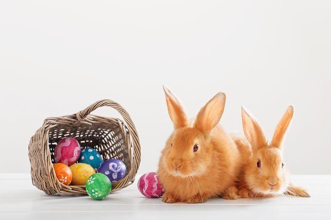 Wielkanoc 2019 - zabawne i tradycyjne życzenia wielkanocne.