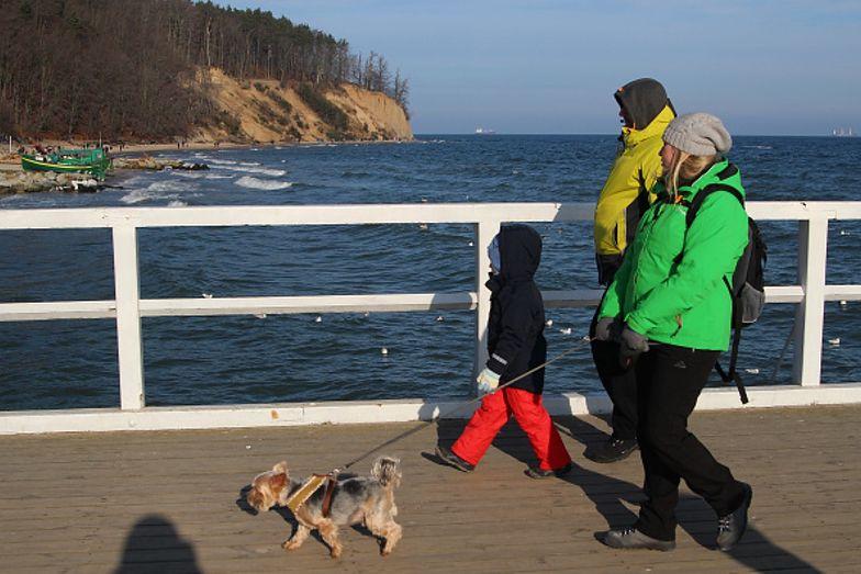 Kary za niedopilnowanie psa. Wchodzi nowe i surowe prawo