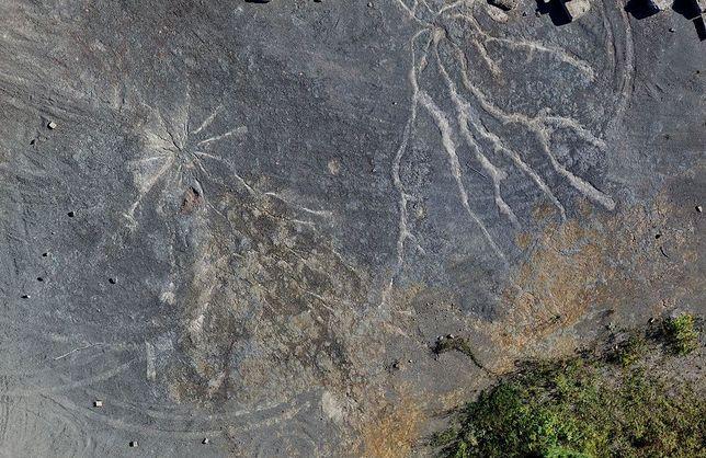System korzeni najstarszego lasu na świecie