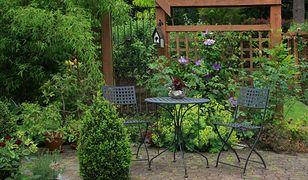 Zasady projektowania małych ogrodów - jakie wybrać rośliny i na co zwrócić uwagę