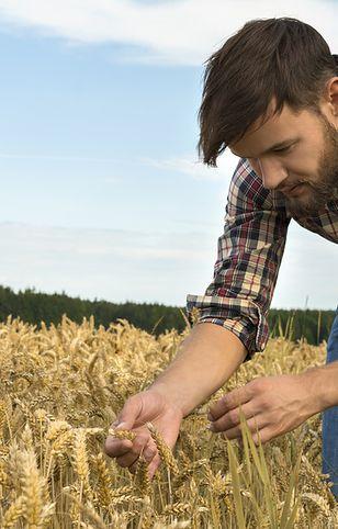 Rolnik na polu ze zbożem.