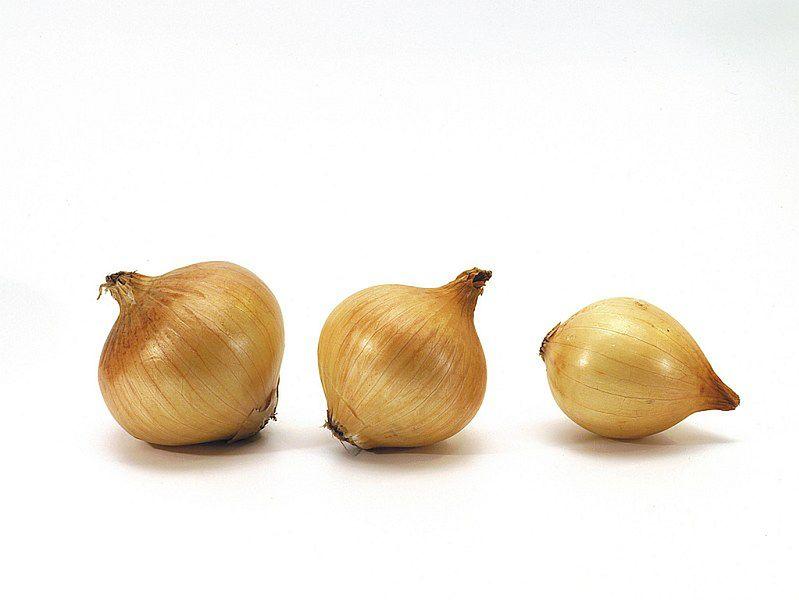Właściwości cebuli