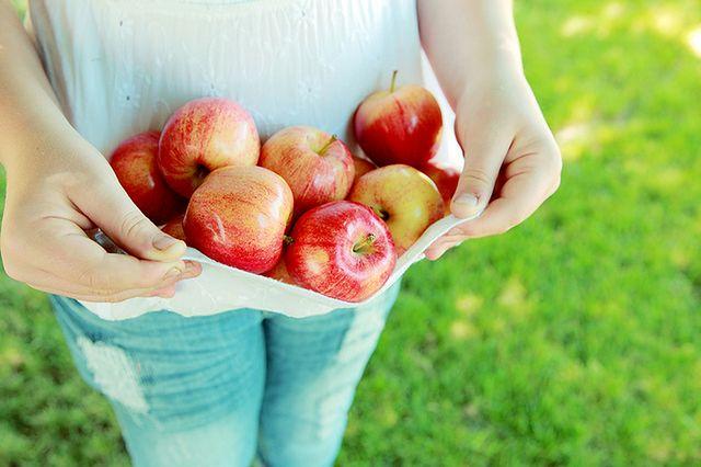 Jabłka zerwana z drzewa