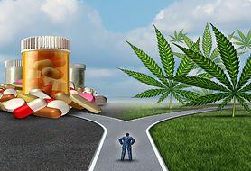Czy marihuana ma właściwości lecznicze?