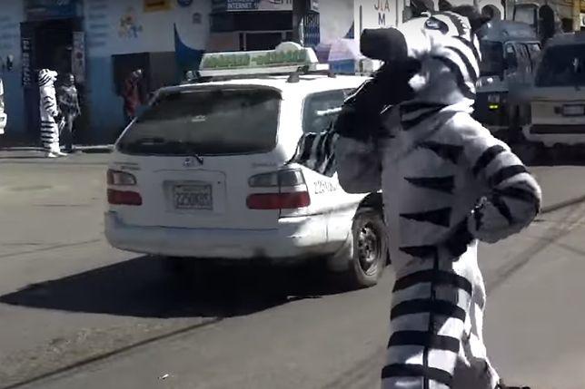 Zebra sterująca ruchem w Boliwii