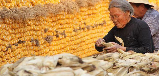 Dubler odsiadywacz, popychacz tłumu i herbaciana dziewica, czyli jak się pracuje w Chinach