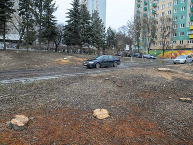 Wypadek podczas wycinki drzew. Nie żyje mężczyzna