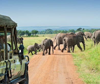 Masai Mara – Afryka w pigułce