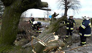 Strażacy usuwają skutki silnego wiatru.
