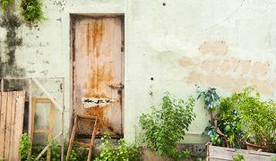 Jak usunąć pleśń i grzyby z elewacji