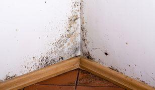 Zbyt rzadkie wietrzenie mieszkania oraz wyższa temperatura powietrza w domu niż na zewnątrz sprzyja gromadzeniu się wilgoci. To otwiera drogę pleśniom i grzybom.