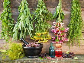 Ziołolecznictwo - charakterystyka, tradycyjne metody leczenia, zioła lecznicze, środki ostrożności
