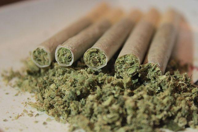 Legalizacja marihuany ma wzbudzić zainteresowanie turystów i przynieść zyski