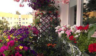 Wysłaliście nam zdjęcia Waszych majówkowych ogródków, działek i balkonów. Są imponujące!