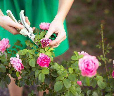 Rośliny do małego ogrodu. Wyglądają pięknie, a nie wymagają dużo pracy
