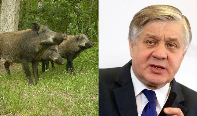 Dziki w polskim lesie/ Minister środowiska