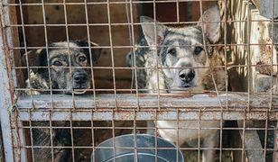 Wrocław. Psy z Radys czekają na nowe imiona i właścicieli. Są w coraz lepszym stanie