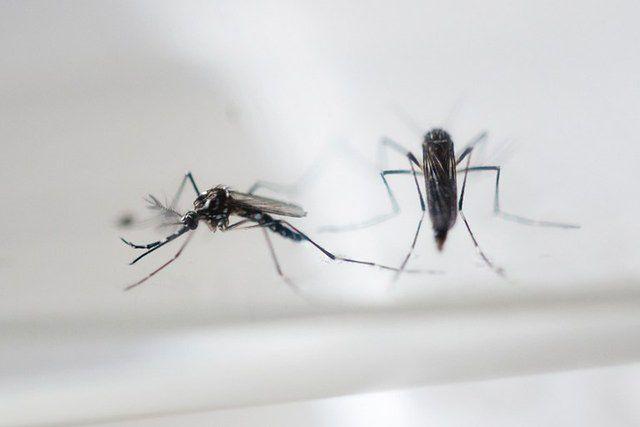 Czy niebezpieczny wirus dotrze do Polski?