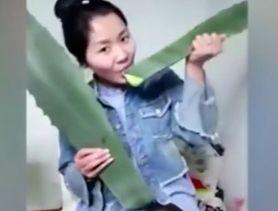 Chińska vlogerka pomyliła aloes z agawą