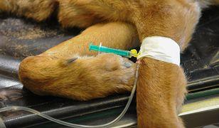 Weterynarze dementują makabryczne plotki o masowym usypianiu zwierząt.