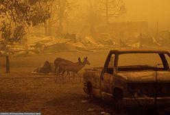 """Kalifornia płonie. Pożar """"Dixie"""" sieje zniszczenie i zatruwa powietrze"""