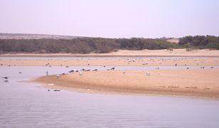 Park Narodowy Souss-Massa to idealne miejsce dla wielbicieli natury