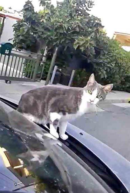 Sąd: kota trzeba pilnować. Właścicielka ukarana