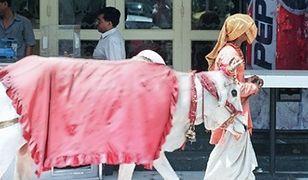 Hinduska Pepsi Cow ze świętej krowy