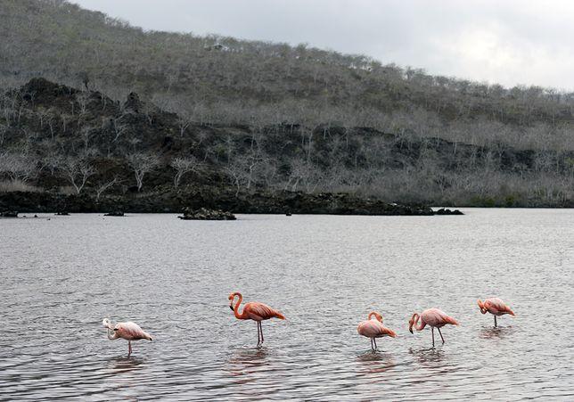 Wyspa Floreana, Ekwador
