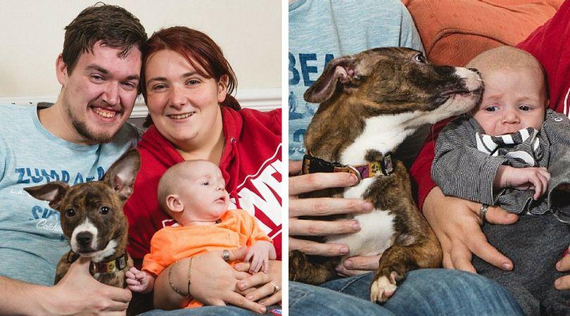 Suczka Lola uratowała życie małego Oliviera