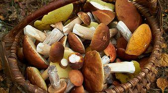 Właściwości grzybów. Oto 5 powodów, dla których warto je jeść