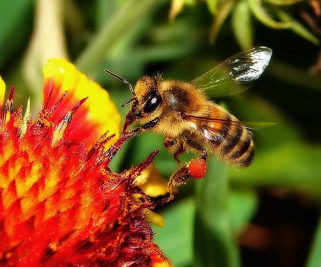 Metody walki z alergią