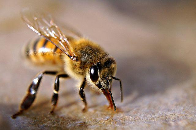 Osy i pszczoły i ich ukąszenia