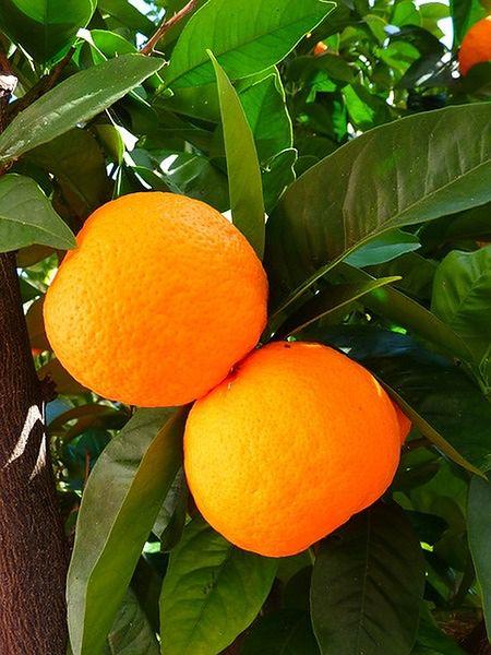 Owoce w skórkach