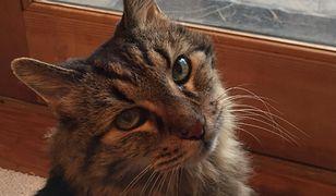 Ma 31 lat i jest prawdopodobnie najstarszym kotem na świecie