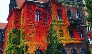 Muzeum Narodowe we Wrocławiu zachwyca internautów na całym świecie