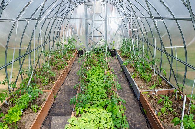 Zasadzisz warzywa i owoce, które trudno utrzymać w normalnych warunkach