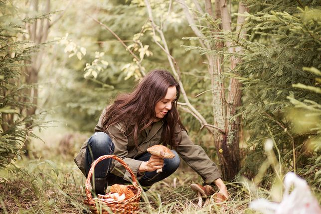 Young woman gathers mushrooms in the forest.