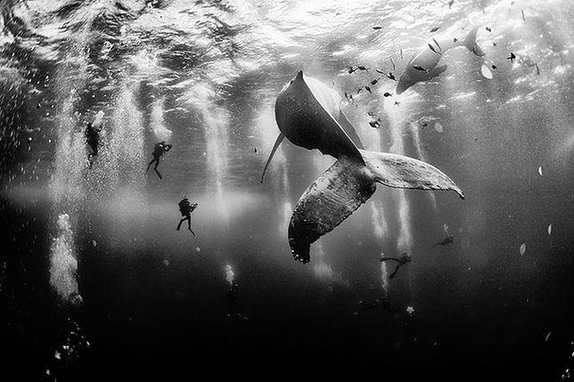Konkurs fotograficzny National Geographic - miejsce 1. Anuar Patjane