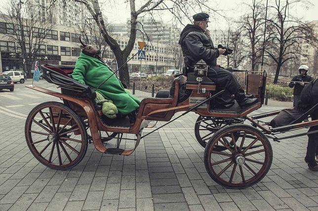 Byk w zielonym płaszczu na ulicach Warszawy!